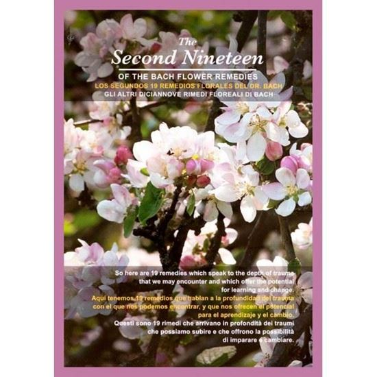 The Second Nineteen of the Bach Flower Remedies DVD