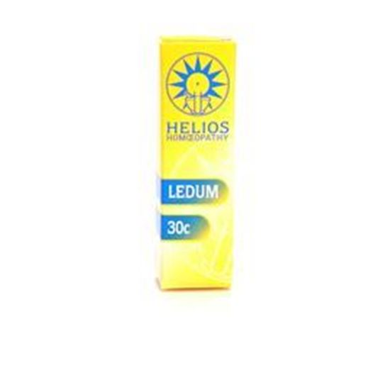 Ledum